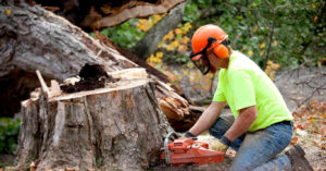 tree trimming services in santa ana